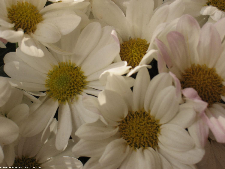 My Stock Photography image by Melfina