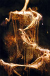 Final Fantasy X-2 image #530
